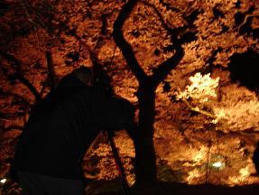 桜39.JPG